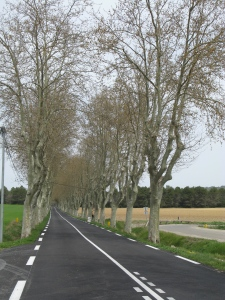 Row of platanes, typical along French national roads